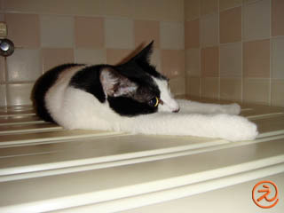 お風呂の蓋の上