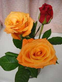 薔薇のプレゼント