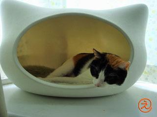 猫型ベッドinみっき