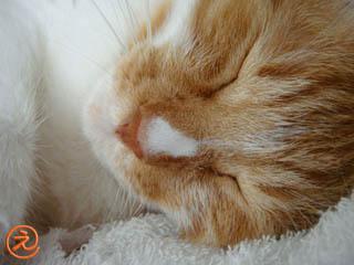 ミンミン寝顔
