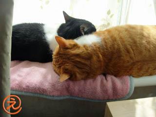 ミンミン枕